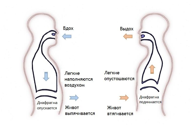 Диафрагмальное дыхание, как выполнять